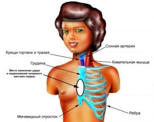 Основы системы кровообращения